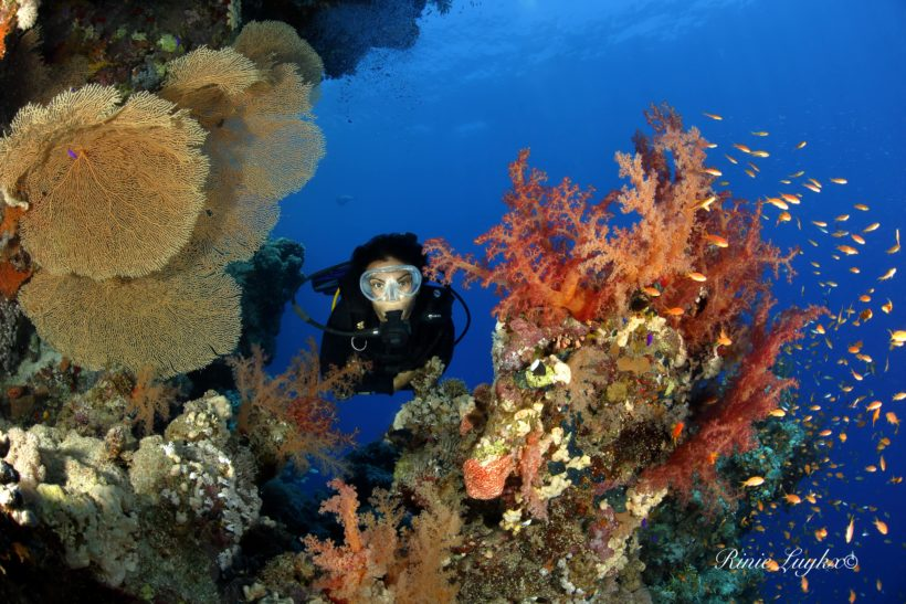 Ornella Ditel diving a Sharm-El-Sheikh